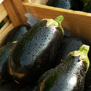 Easy to grow veggies -Eggplant