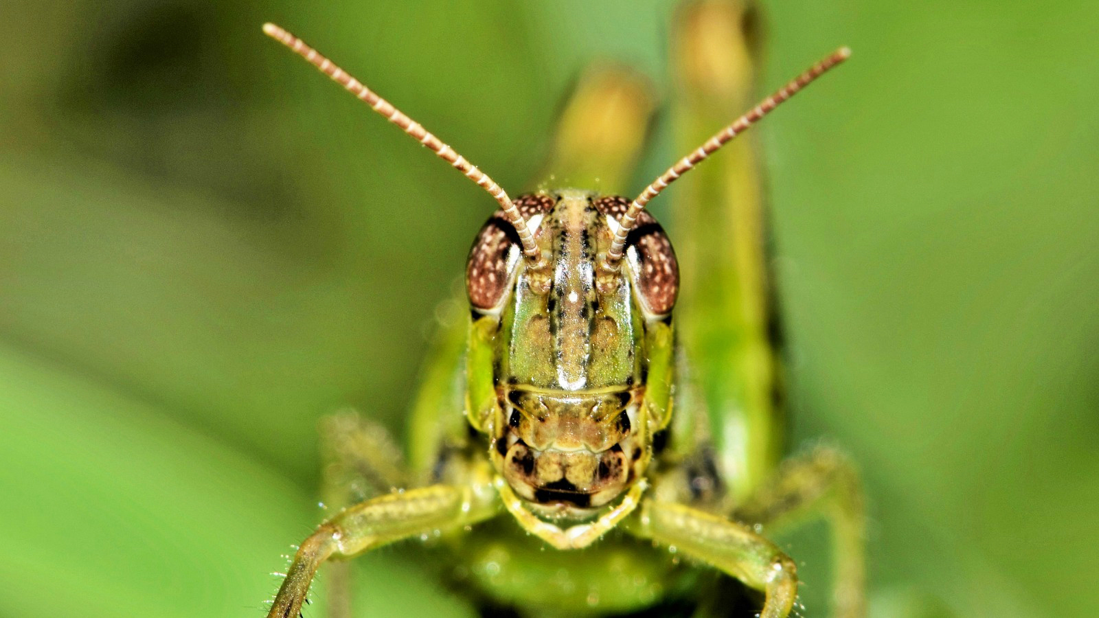 17 bugs in your vegetable garden you need to know
