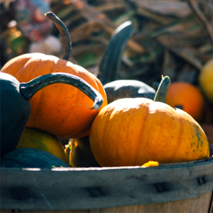 Easy to grow veggies - Pumpkin