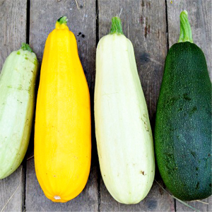 Easy to grow veggies - Zucchini