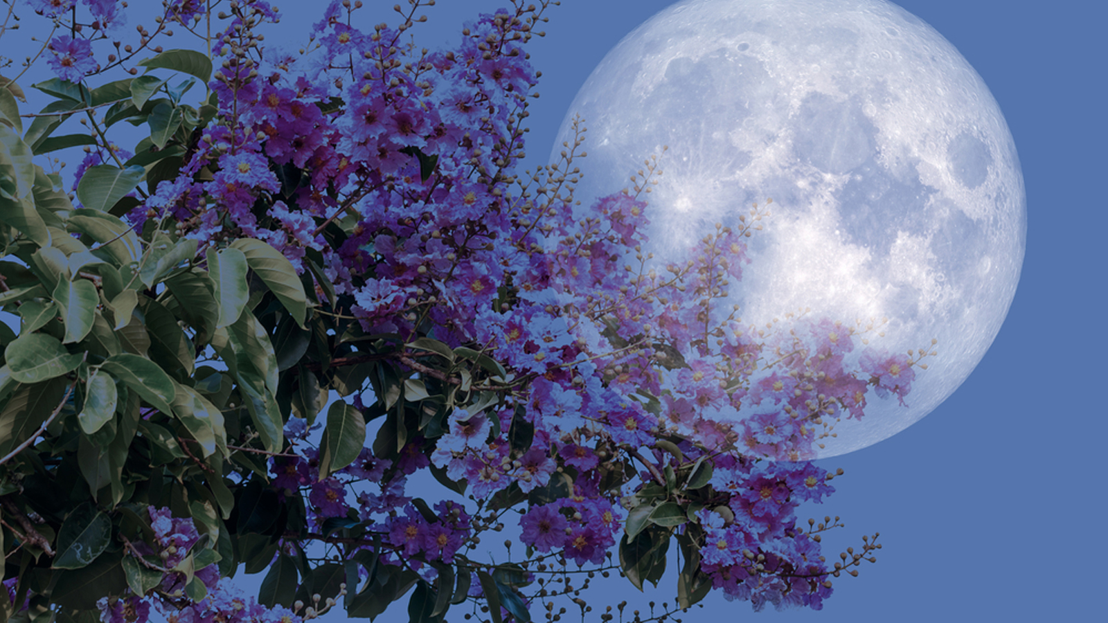 Moon planting guide: Everything you need to know