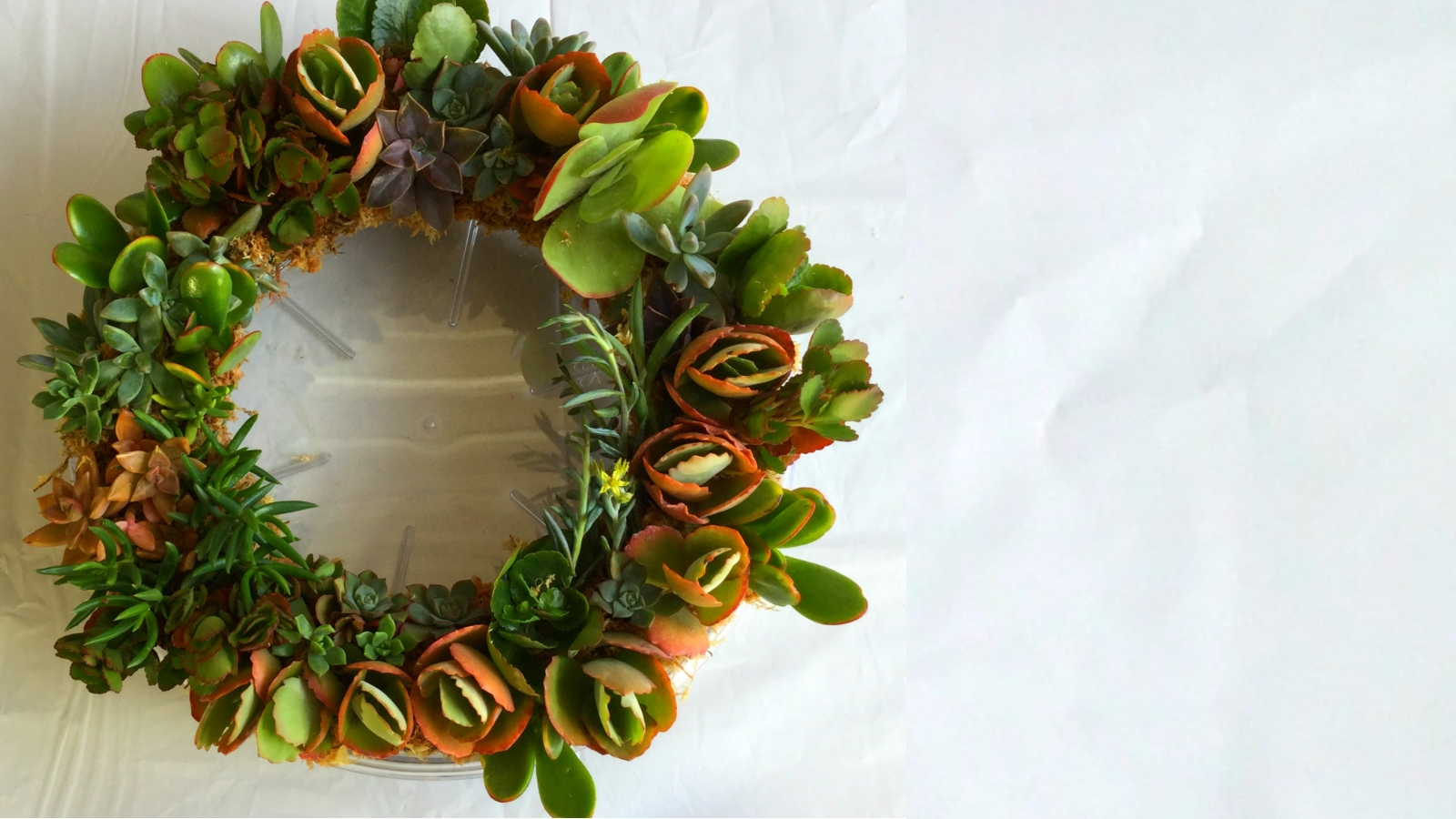 How to make a simple living succulent wreath