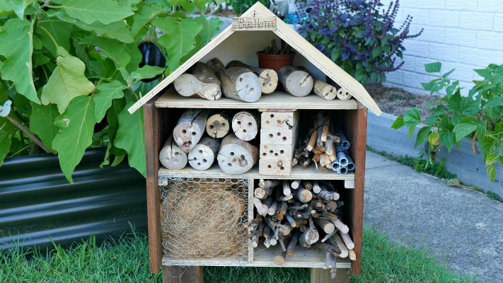 insect hotel in the garden