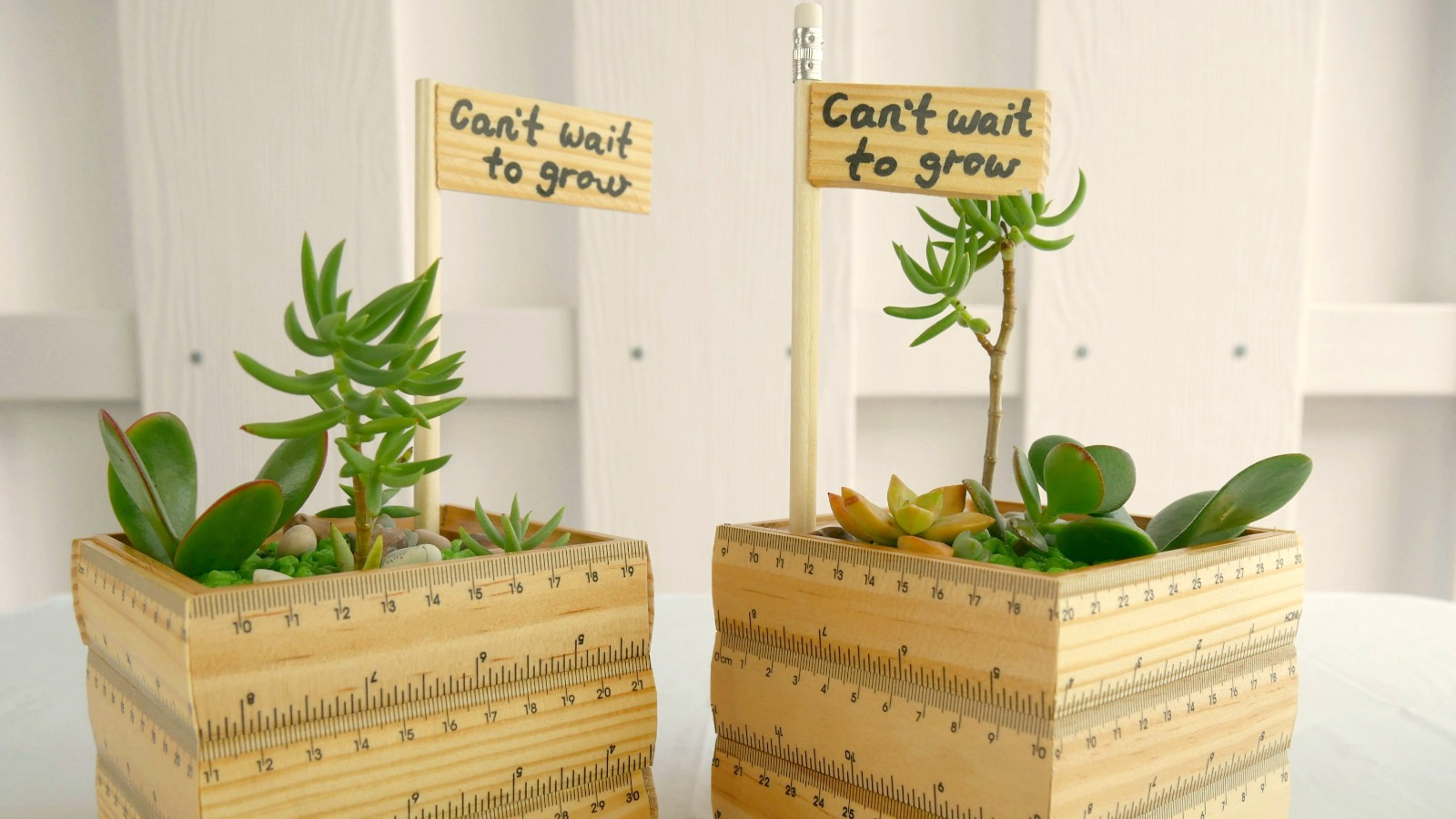 Make your own succulent planter teachers gift