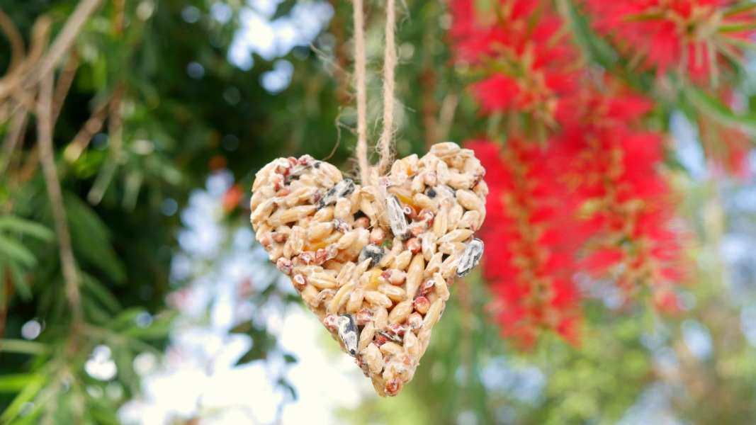 How to Make Fun & Easy Australian Native Bird Feeders
