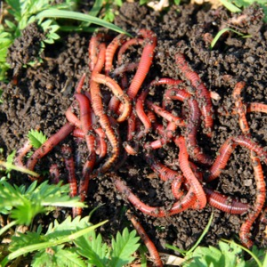 Becoming Sustainable - composting