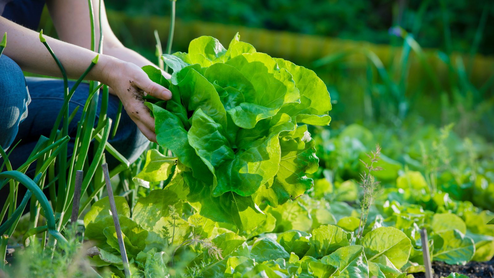 Find out what veggies to plant now for amazing results!