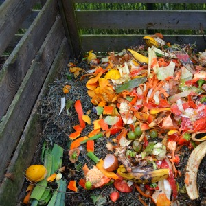 Vegetable garden - compost with scraps