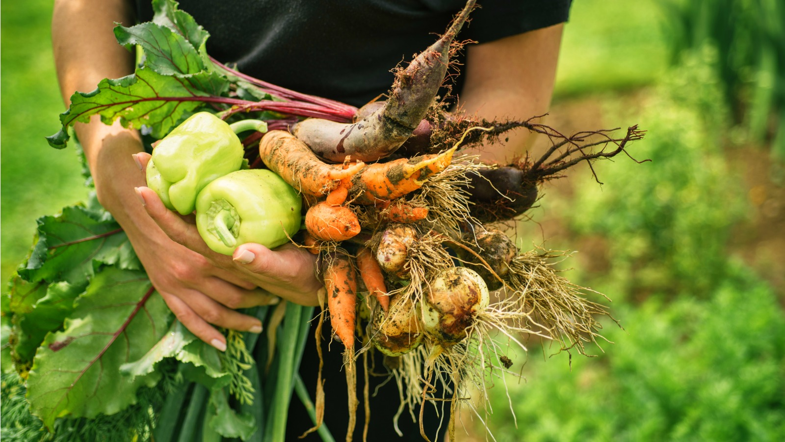 Can you really save money growing vegetables at home?