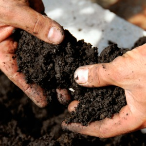 vegetable garden - rich soil
