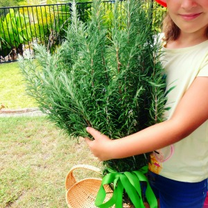 vegetable garden - rosemary