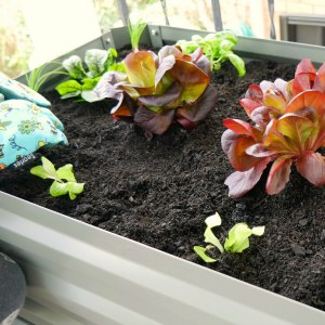 The Balcony Garden - planting vegetables and herbs