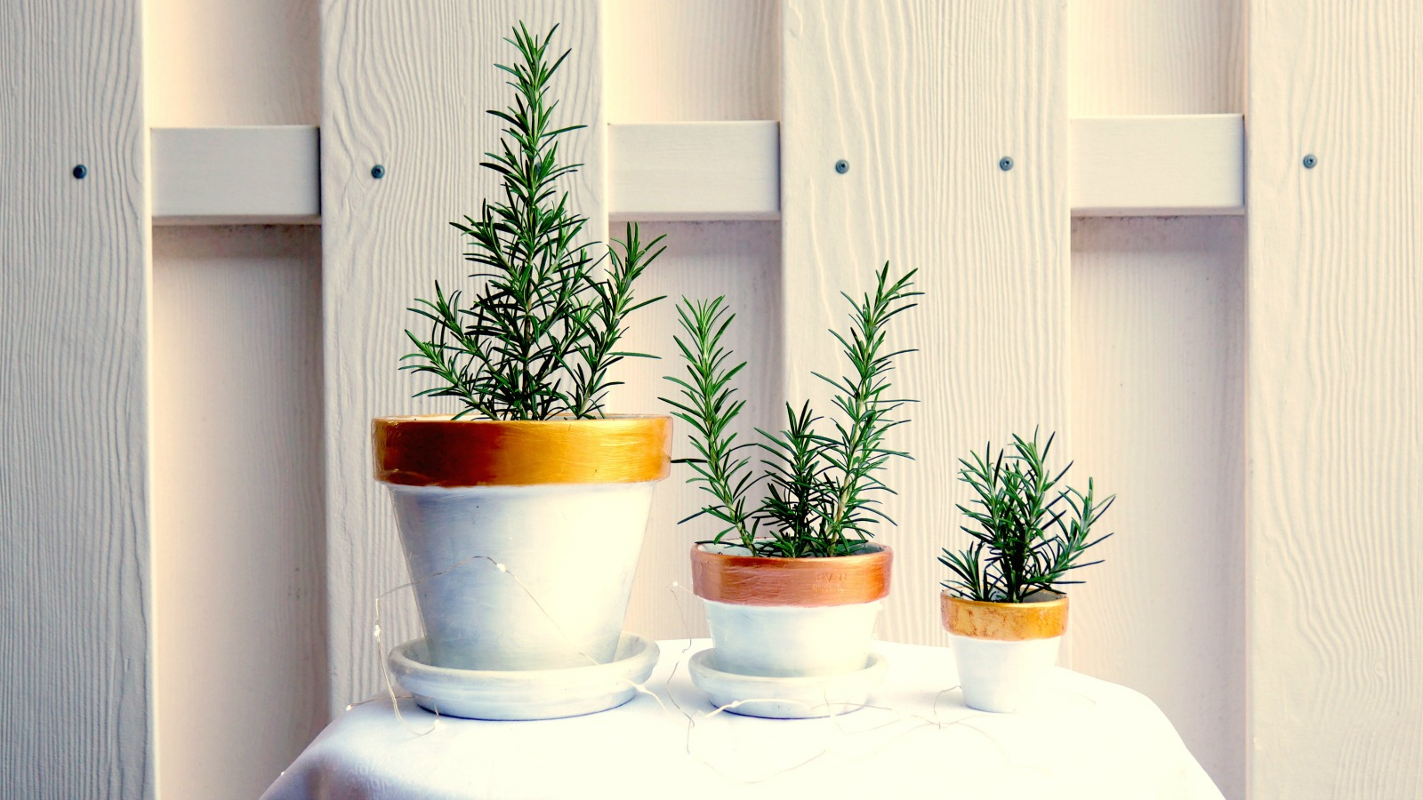 How to turn rosemary cuttings into a gift