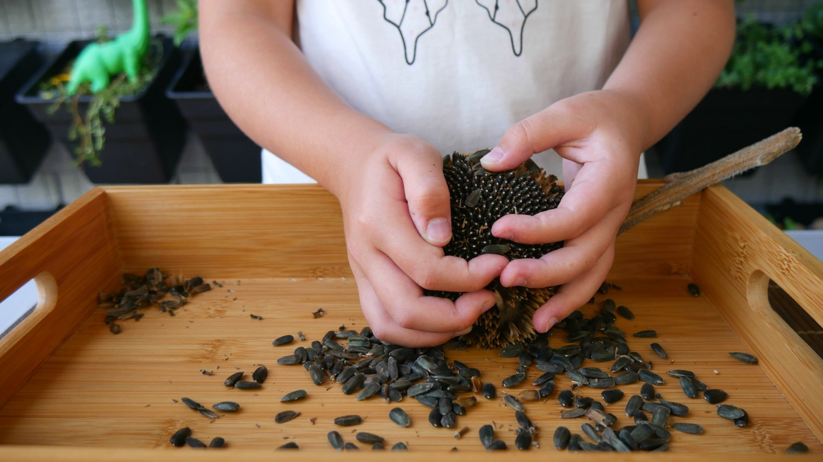 You'll love how easy seed saving really is