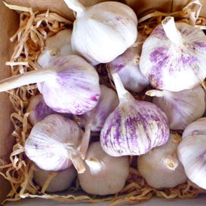 How to grow garlic in Australia_organic purple Monaro Garlic