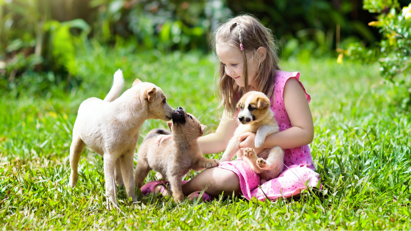Pet-poo-composter-girl-with-puppies-cute